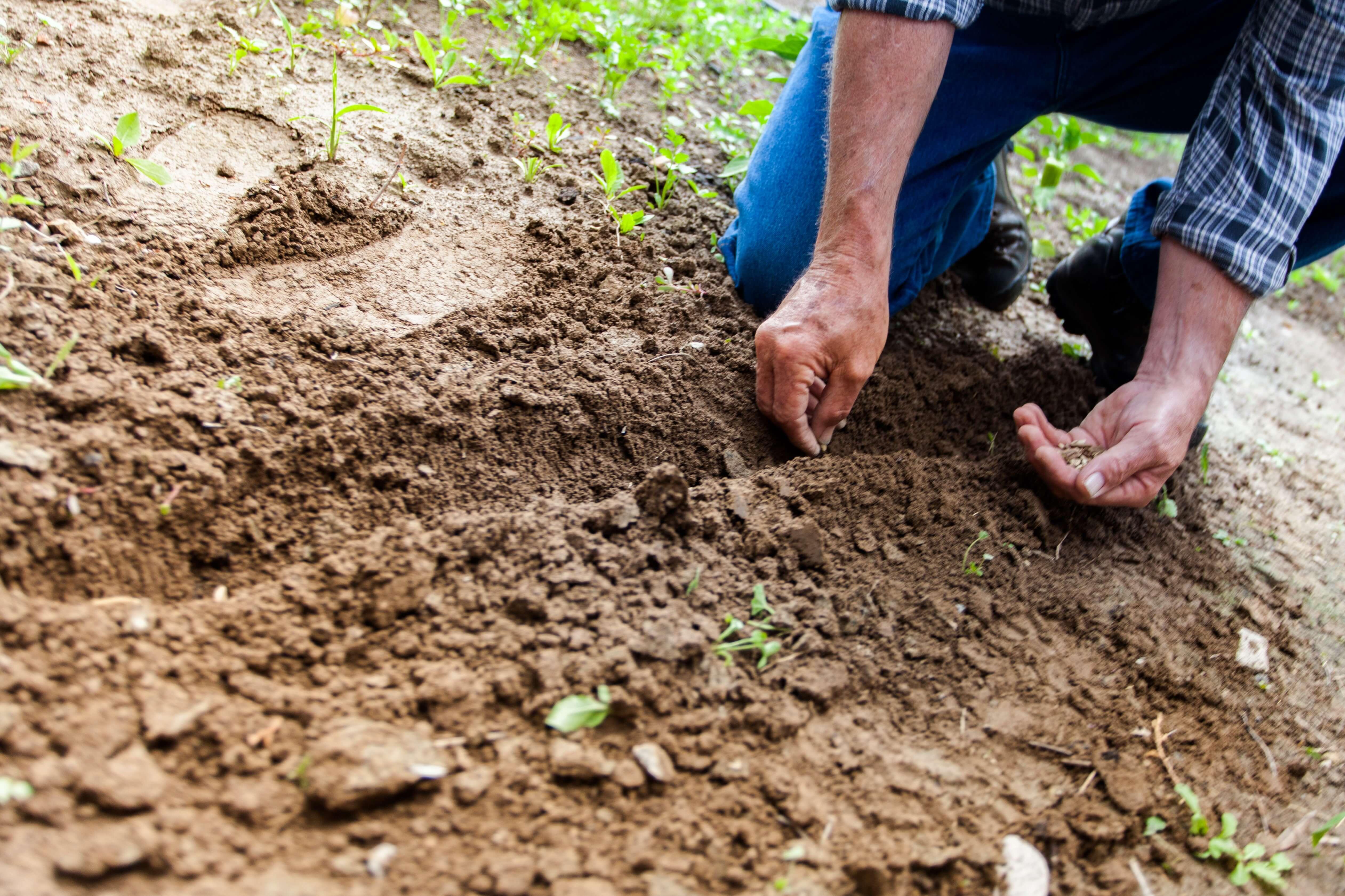 Een boom wordt geplant via het Plant a Billion Trees project na elke bestelling. Zo kan Hood&Wood de plattegrond $place in hout graveren zonder dat de wereld daar slechter van wordt.